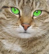 Cat Green Eyes face