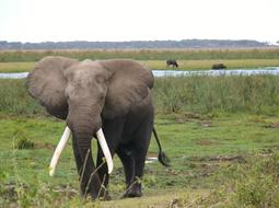 Amboseli National Park elephant