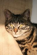 face of tabby Cat relaxing on sofa