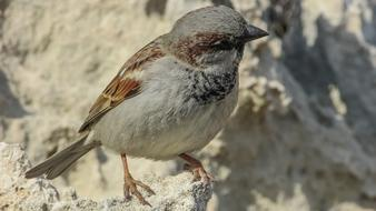 sparrow is sitting on a white stone
