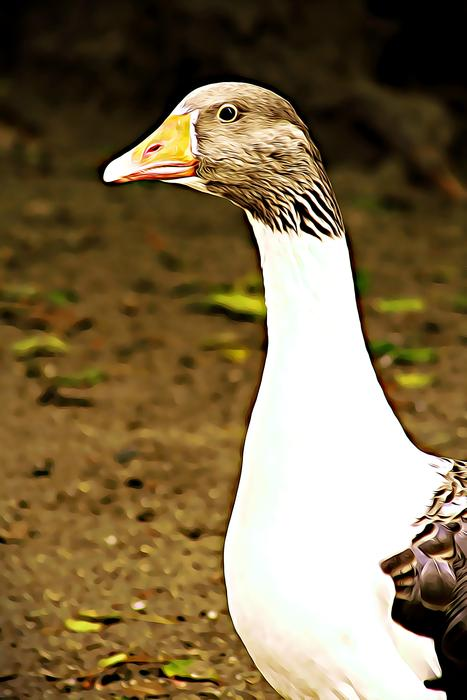 white and brown Goose, head close up