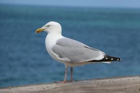 profile photo of a seagull against the background of a warm sea