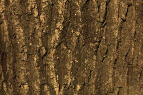 Texture Tree Bark brown