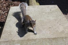 goodly Squirrel Outdoors