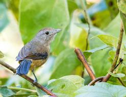 small tropical bird on a branch of a green bush