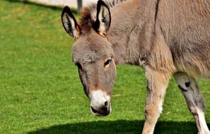 Donkey green grass