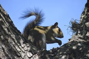 Squirrel Wildlife tree