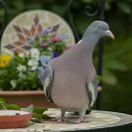 pigeon is sitting on a mosaic table