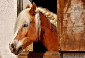 incredibly charming Horse Stable Animal