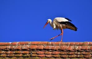 Stork Bird red roof