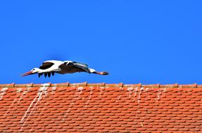 Stork Bird Fly red roof