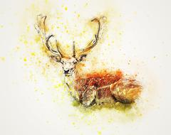 deer lying down abstract drawing