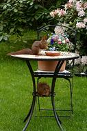 Animal Rodent Squirrel garden table