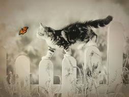 Cat and Butterfly play