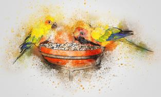 watercolor drawing of two parrots on a feeder