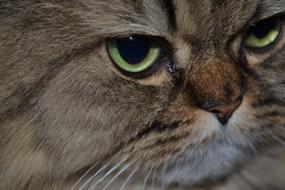 Persian Cat'S Eyes