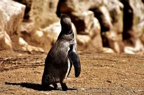 incredibly charming Penguin
