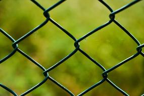 Barbed Wire green background