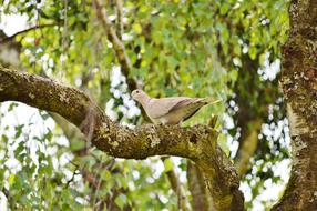 beige dove is sitting on a tree