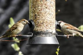 Sparrows Sperling House