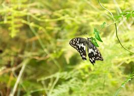 Butterfly Insect Nature grass green