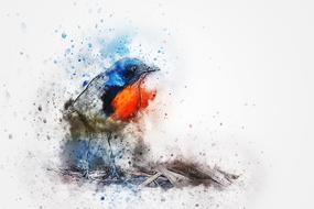 bird robin feathers art abstract drawing