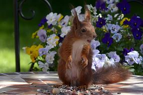 Animal Rodent Squirrel and flowers