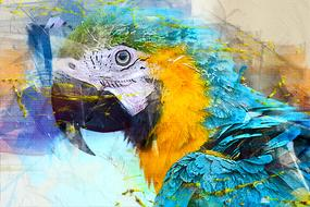 digital image of a colorful parrot