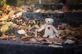 Bear Toy and dry leaves