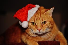Cat Christmas Santa hat red
