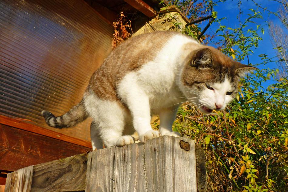 domestic cat on a wooden fence on a sunny day
