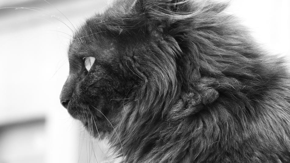 Black and white portrait of Cat Hair
