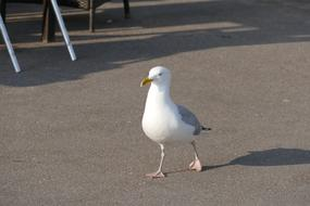 Seagull Bird white city