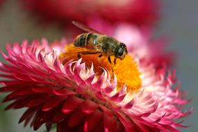 Hoverfly Insect red flower