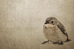 vintage drawing, small bird