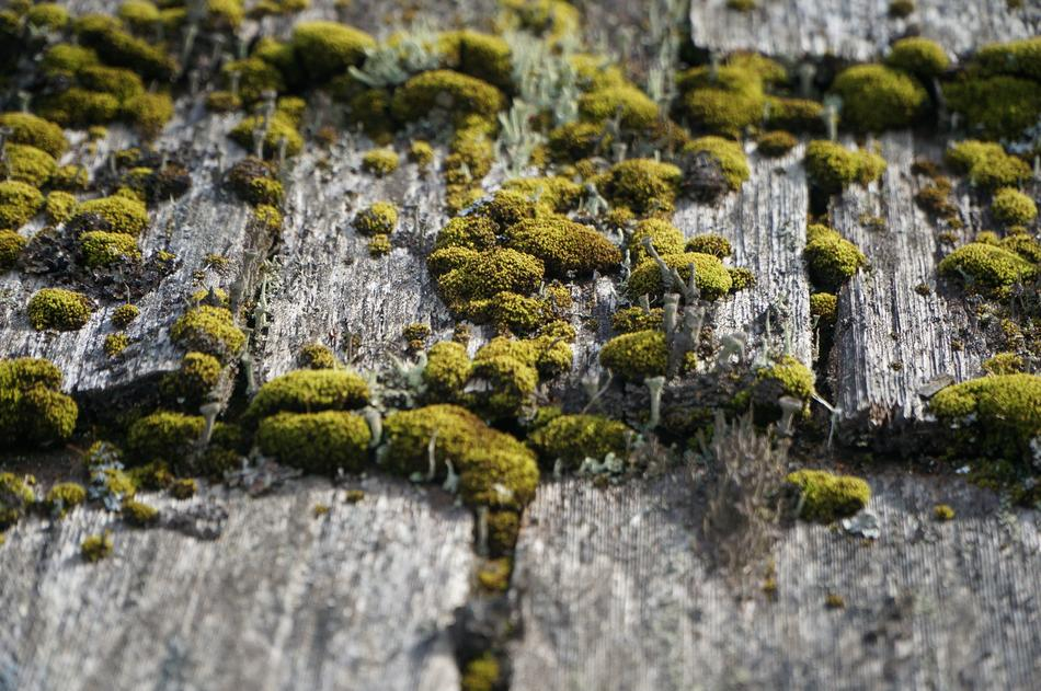 Wood Weathered Moss green