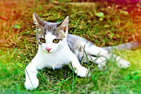 Cat white Green grass
