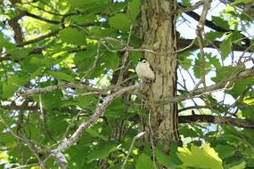 White Breasted bird green tree
