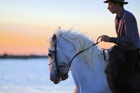 Horse White person sunset