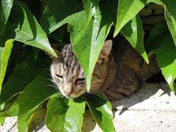 Kitten Tabby Domestic green leaves