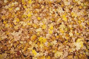 Autumn Leaves yellow gold Background