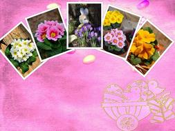 Easter Collage Background pink