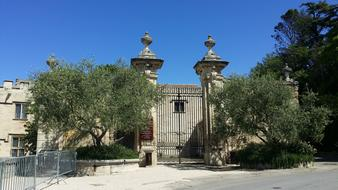 Olive Trees and gate