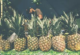 Farmer and pineapples