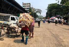 Man carrying bunch of dead chickens on street market