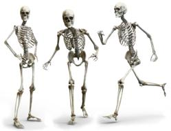drawn three dancing skeletons on a white background