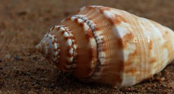 macro photo of brown seashell on the beach